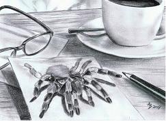 schlange zeichnung bleistift